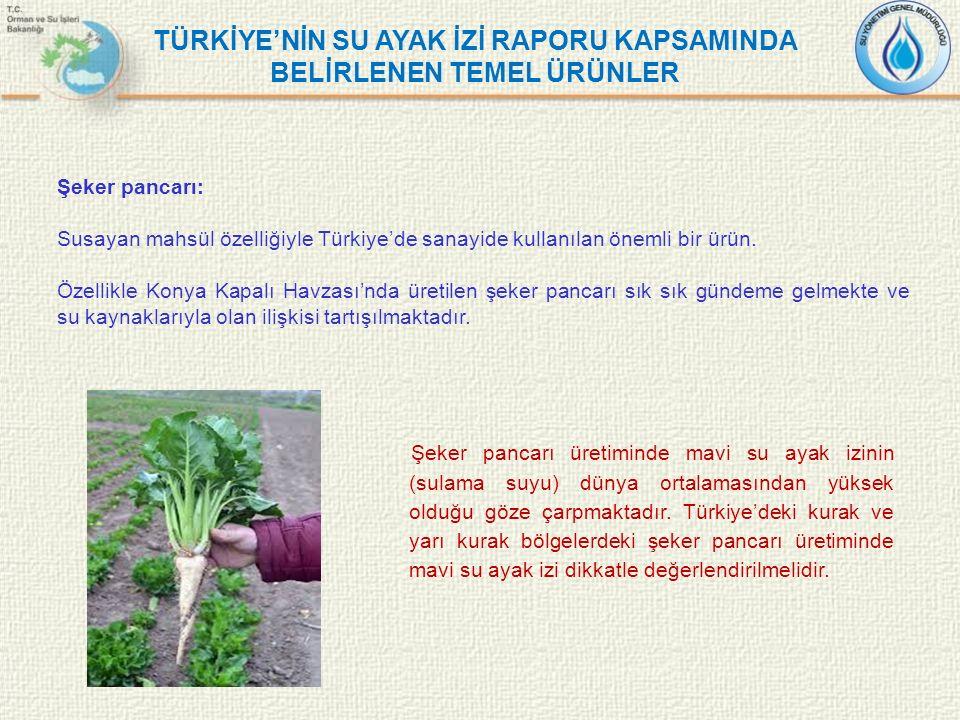 Şeker pancarı: Susayan mahsül özelliğiyle Türkiye'de sanayide kullanılan önemli bir ürün. Özellikle Konya Kapalı Havzası'nda üretilen şeker pancarı sı