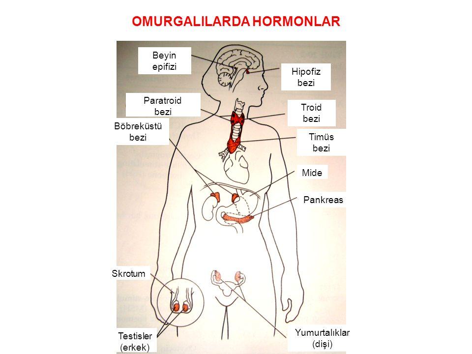 Troid bezi Timüs bezi Mide Pankreas Hipofiz bezi Beyin epifizi Paratroid bezi Böbreküstü bezi Skrotum Yumurtalıklar (dişi) Testisler (erkek) OMURGALIL