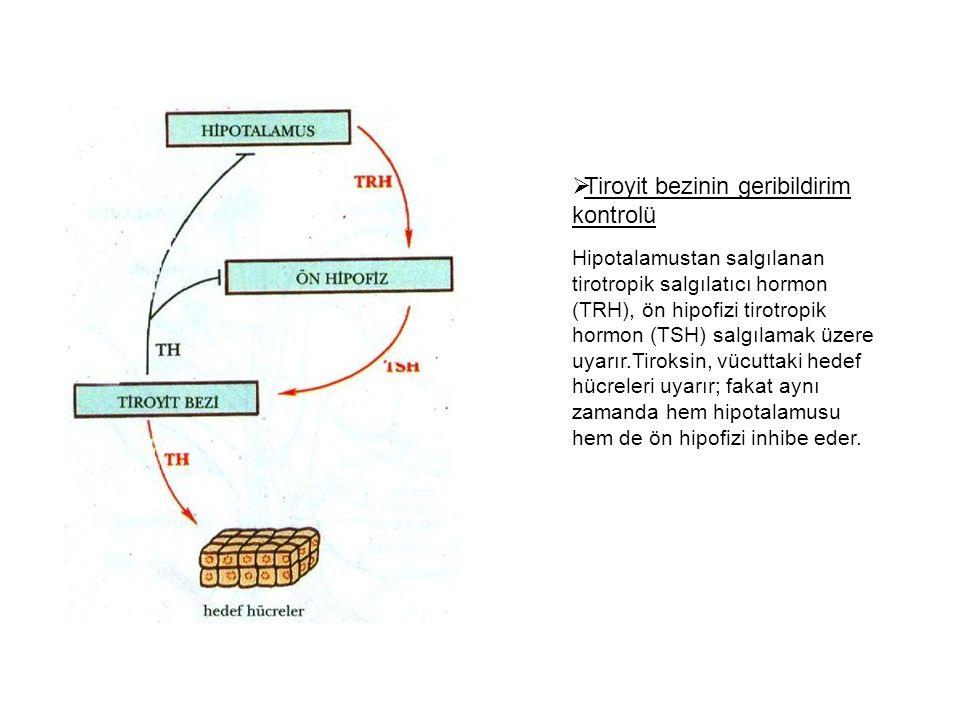  Tiroyit bezinin geribildirim kontrolü Hipotalamustan salgılanan tirotropik salgılatıcı hormon (TRH), ön hipofizi tirotropik hormon (TSH) salgılamak