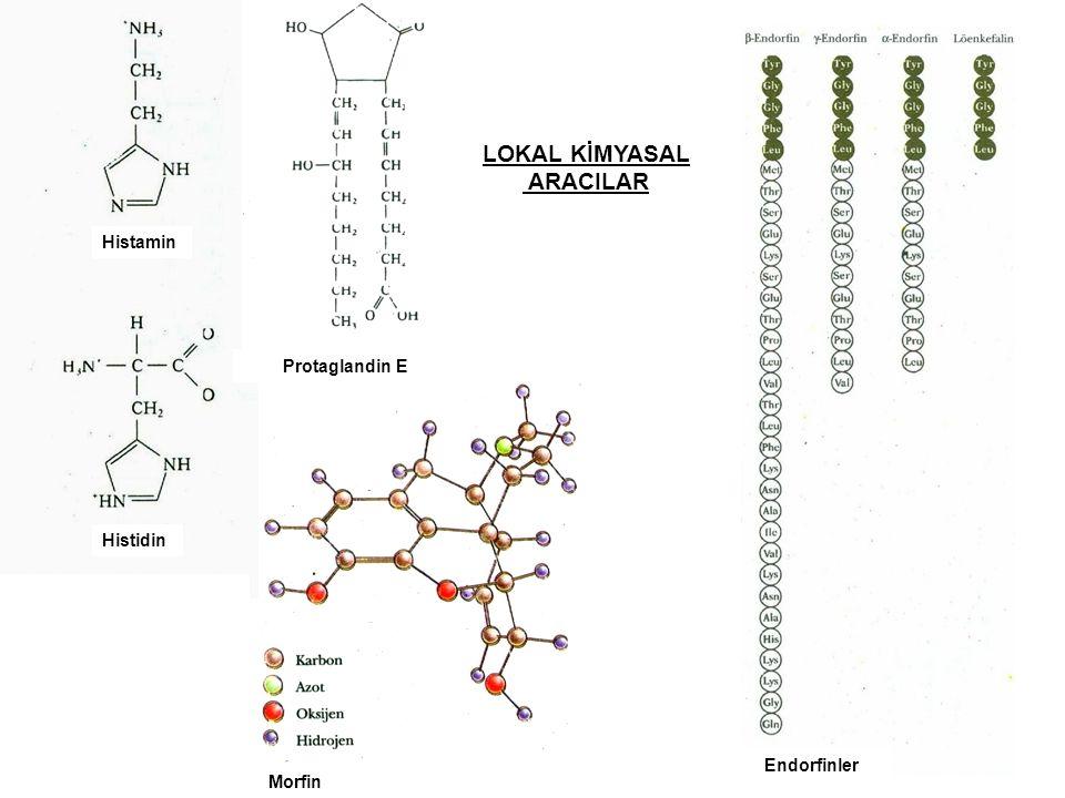 Histamin LOKAL KİMYASAL ARACILAR Histidin Morfin Protaglandin E Endorfinler