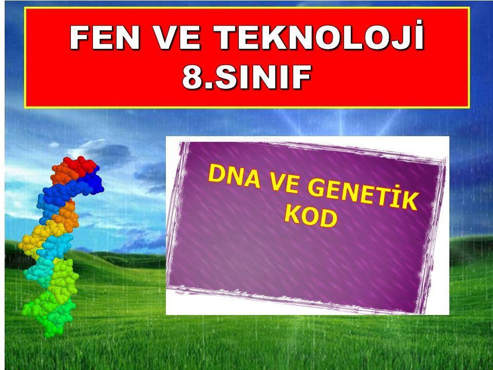 2- Bir DNA'nın yapısında aşağıdaki birimlerin hangisinin sayısı her zaman birbirine eşittir.