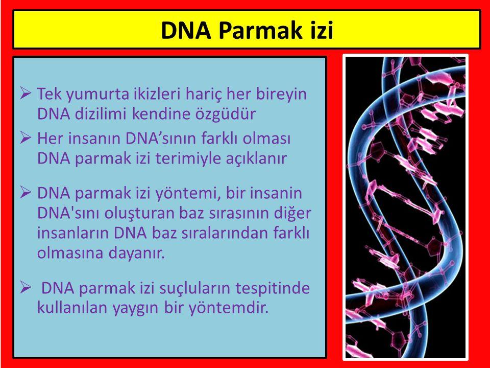  Tek yumurta ikizleri hariç her bireyin DNA dizilimi kendine özgüdür  Her insanın DNA'sının farklı olması DNA parmak izi terimiyle açıklanır  DNA p