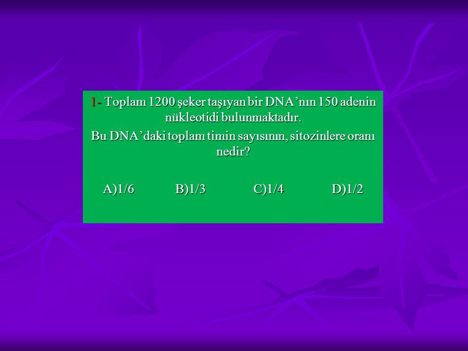 1- Toplam 1200 şeker taşıyan bir DNA'nın 150 adenin nükleotidi bulunmaktadır. Bu DNA'daki toplam timin sayısının, sitozinlere oranı nedir? A)1/6 B)1/3