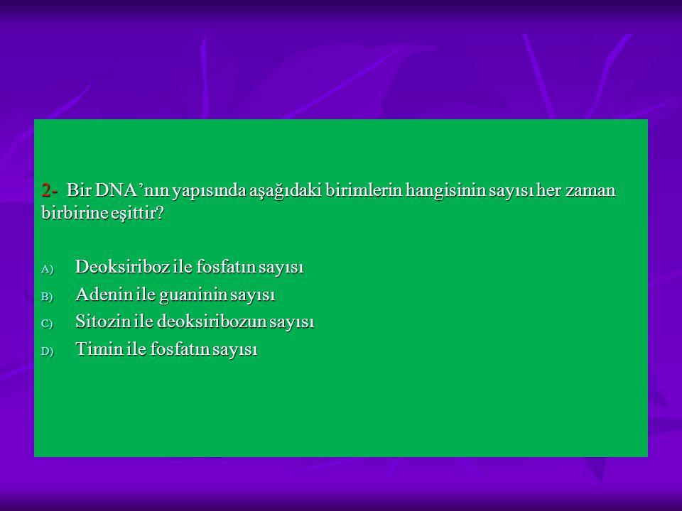 2- Bir DNA'nın yapısında aşağıdaki birimlerin hangisinin sayısı her zaman birbirine eşittir? A) Deoksiriboz ile fosfatın sayısı B) Adenin ile guaninin