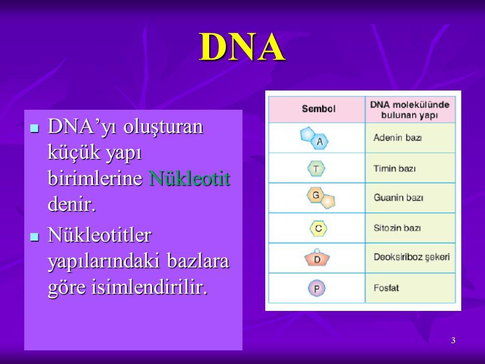 DNA DNA'yı oluşturan küçük yapı birimlerine Nükleotit denir. DNA'yı oluşturan küçük yapı birimlerine Nükleotit denir. Nükleotitler yapılarındaki bazla