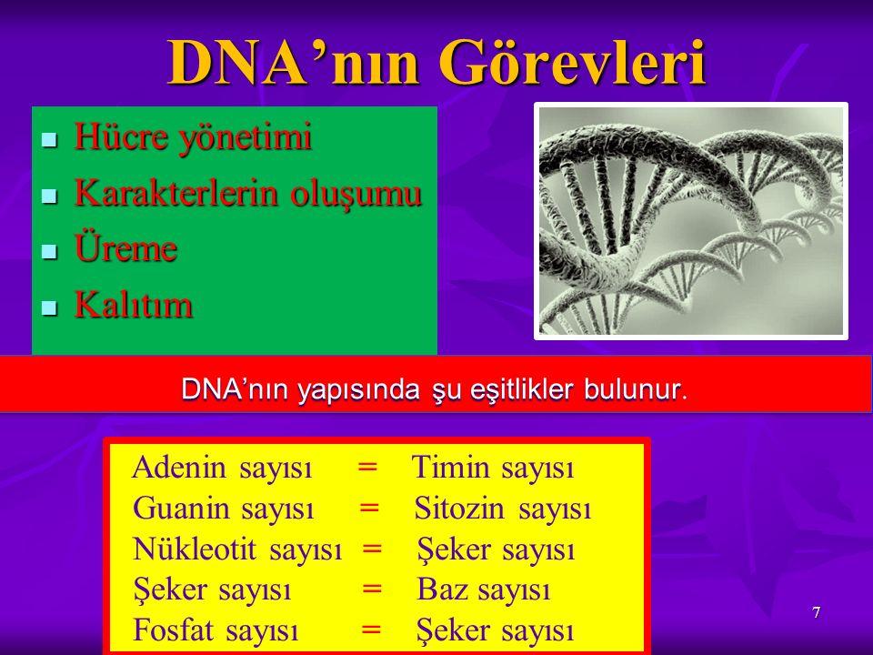 DNA'nın Görevleri Hücre yönetimi Hücre yönetimi Karakterlerin oluşumu Karakterlerin oluşumu Üreme Üreme Kalıtım Kalıtım 7 DNA'nın yapısında şu eşitlik