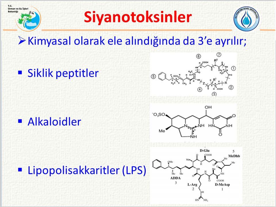 Kimyasal Sınıflandırma Siyanotoksin AdıHedef OrganSiyanobakteri Siklik peptitler MikrosistinKaraciğer Microcystis, Anabaena, Planktothrix Nostoc, Hapalosiphon, Anabaenopsis NodularinKaraciğerNodularia Alkaloidler Anatoksin-aSinir sinapsları Anabaena, Planktothrix (Oscillatoria), Aphanizomenon AplysiatoksinDeri Lyngbya, Schizothrix, Planktothrix (Oscillatoria) SilindrospermopsinKaraciğer Cylindrospermopsis, Aphanizomenon, Umezakia Lyngbiyatoksin-a Deri ve bağırsak sistemi Lyngbya SaksitoksinSinir aksonları Anabaena, Aphanizomenon, Lyngbya, Cylindrospermopsis Lipopolisakkaritler (LPS) Deride kızarıklık ve tahriş Tamamı Siyanotoksinler