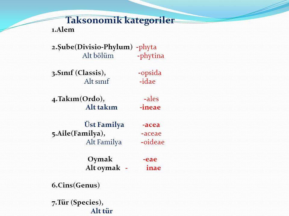 1.Alem 2.Şube(Divisio-Phylum) -phyta Alt bölüm -phytina 3.Sınıf (Classis), -opsida Alt sınıf -idae 4.Takım(Ordo), -ales Alt takım -ineae Üst Familya -