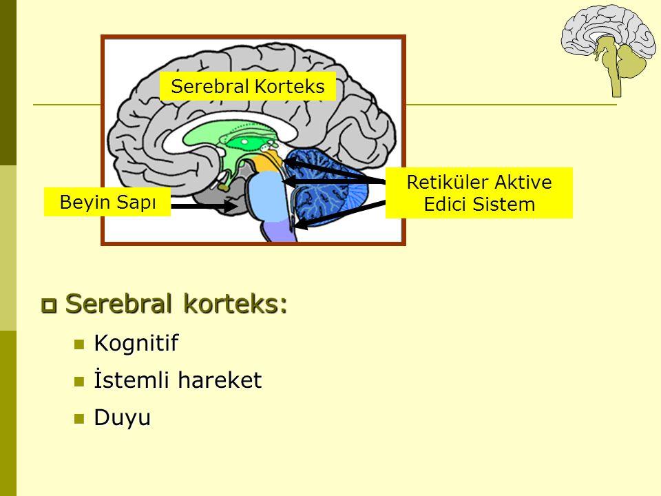  Serebral korteks: Kognitif Kognitif İstemli hareket İstemli hareket Duyu Duyu Serebral Korteks Beyin Sapı Retiküler Aktive Edici Sistem