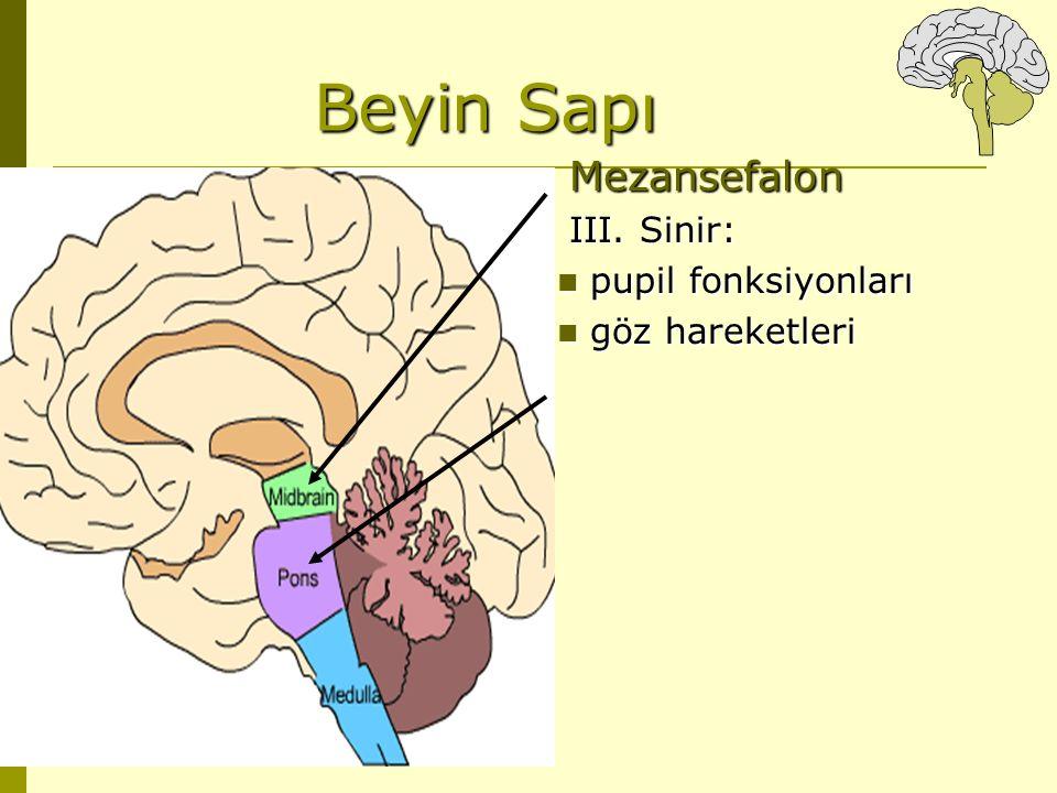 Beyin Sapı Mezansefalon III. Sinir: pupil fonksiyonları pupil fonksiyonları göz hareketleri göz hareketleri