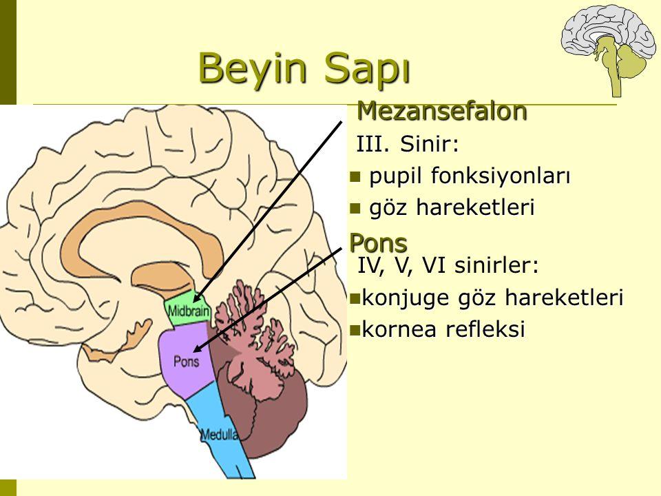 Beyin Sapı Mezansefalon III. Sinir: pupil fonksiyonları pupil fonksiyonları göz hareketleri göz hareketleriPons IV, V, VI sinirler: konjuge göz hareke