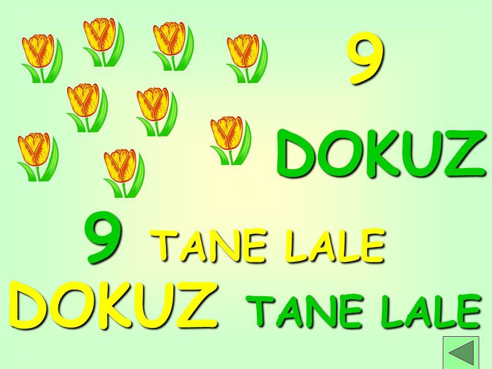 9 TANE LALE DOKUZ TANE LALE DOKUZ 9