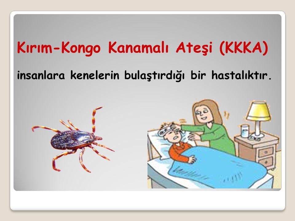 insanlara kenelerin bulaştırdığı bir hastalıktır. Kırım-Kongo Kanamalı Ateşi (KKKA)
