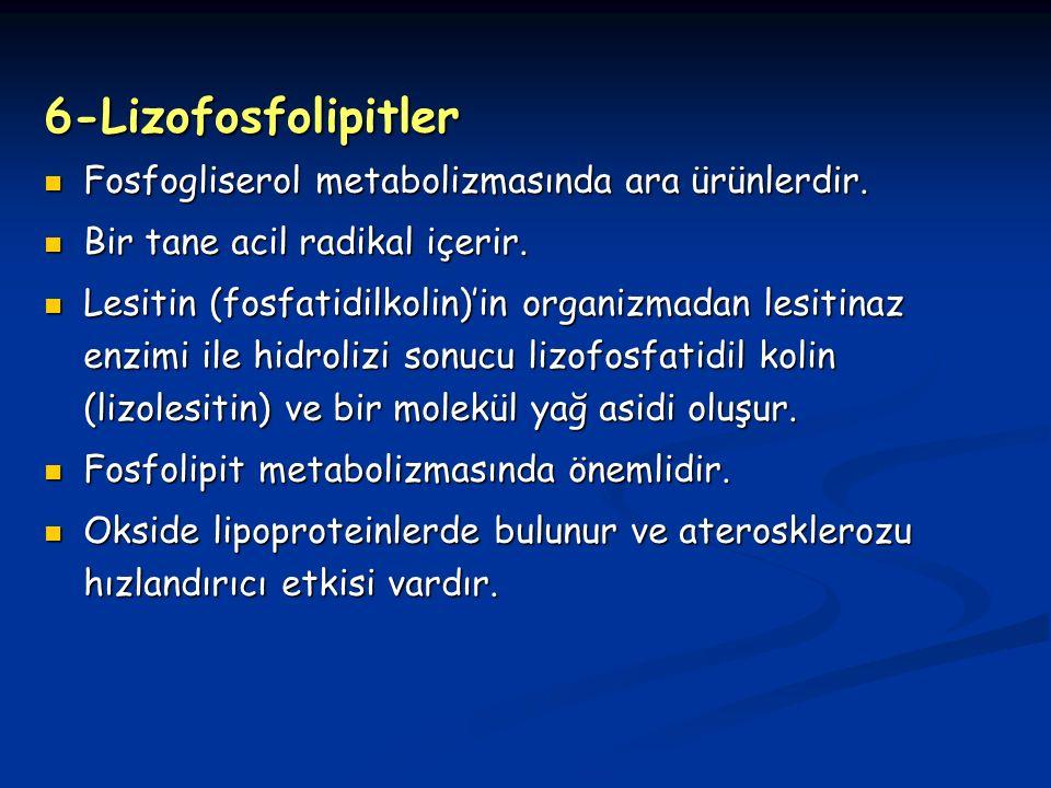 6-Lizofosfolipitler Fosfogliserol metabolizmasında ara ürünlerdir.