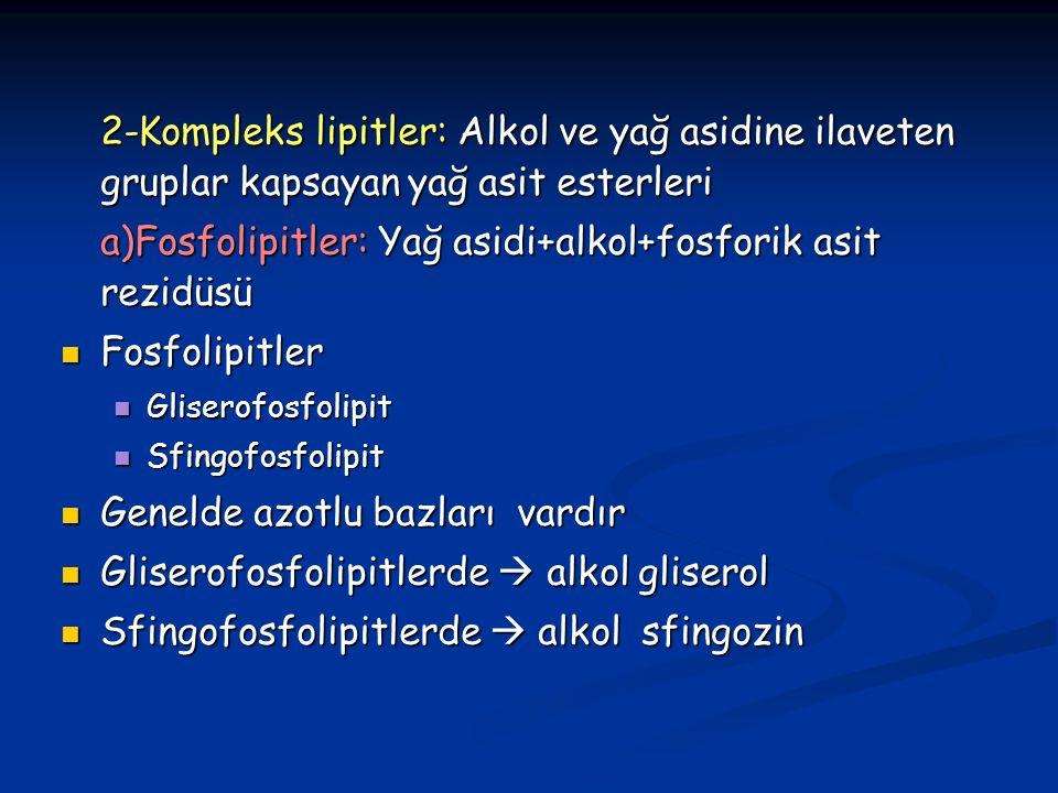 2-Kompleks lipitler: Alkol ve yağ asidine ilaveten gruplar kapsayan yağ asit esterleri a)Fosfolipitler: Yağ asidi+alkol+fosforik asit rezidüsü Fosfolipitler Fosfolipitler Gliserofosfolipit Gliserofosfolipit Sfingofosfolipit Sfingofosfolipit Genelde azotlu bazları vardır Genelde azotlu bazları vardır Gliserofosfolipitlerde  alkol gliserol Gliserofosfolipitlerde  alkol gliserol Sfingofosfolipitlerde  alkol sfingozin Sfingofosfolipitlerde  alkol sfingozin