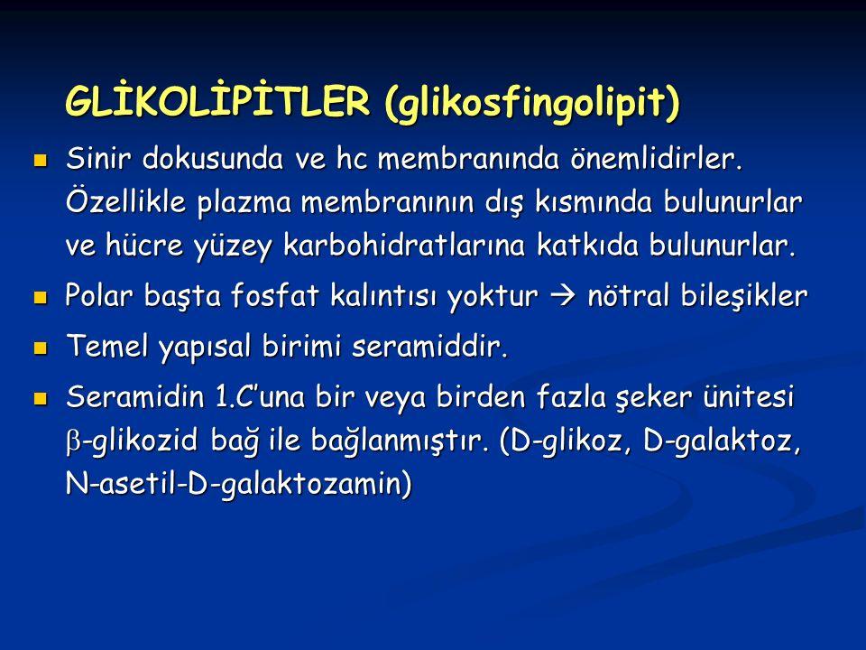 GLİKOLİPİTLER (glikosfingolipit) Sinir dokusunda ve hc membranında önemlidirler.