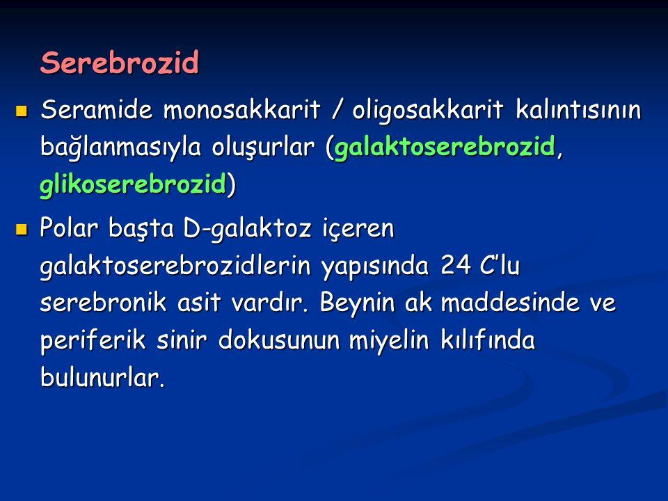 Serebrozid Seramide monosakkarit / oligosakkarit kalıntısının bağlanmasıyla oluşurlar (galaktoserebrozid, glikoserebrozid) Seramide monosakkarit / oligosakkarit kalıntısının bağlanmasıyla oluşurlar (galaktoserebrozid, glikoserebrozid) Polar başta D-galaktoz içeren galaktoserebrozidlerin yapısında 24 C'lu serebronik asit vardır.
