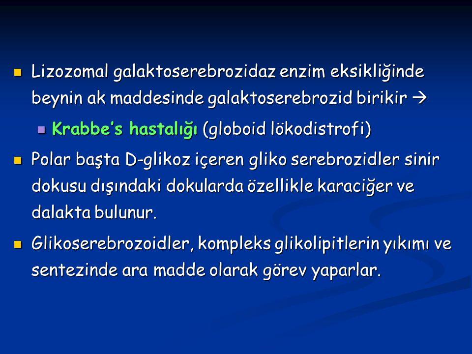 Lizozomal galaktoserebrozidaz enzim eksikliğinde beynin ak maddesinde galaktoserebrozid birikir  Lizozomal galaktoserebrozidaz enzim eksikliğinde beynin ak maddesinde galaktoserebrozid birikir  Krabbe's hastalığı (globoid lökodistrofi) Krabbe's hastalığı (globoid lökodistrofi) Polar başta D-glikoz içeren gliko serebrozidler sinir dokusu dışındaki dokularda özellikle karaciğer ve dalakta bulunur.