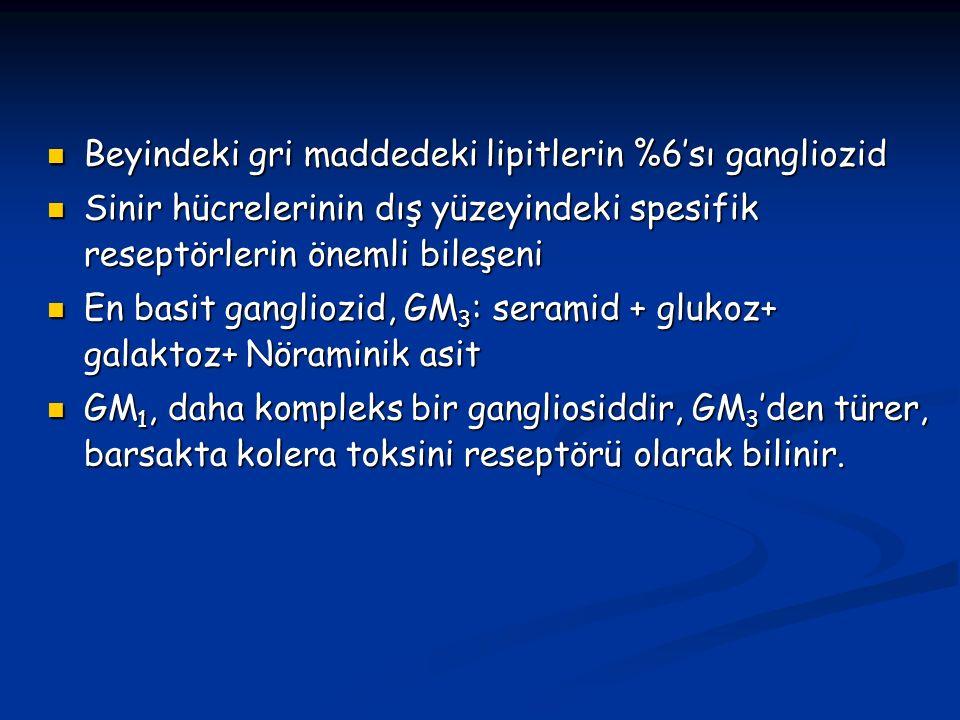 Beyindeki gri maddedeki lipitlerin %6'sı gangliozid Beyindeki gri maddedeki lipitlerin %6'sı gangliozid Sinir hücrelerinin dış yüzeyindeki spesifik reseptörlerin önemli bileşeni Sinir hücrelerinin dış yüzeyindeki spesifik reseptörlerin önemli bileşeni En basit gangliozid, GM 3 : seramid + glukoz+ galaktoz+ Nöraminik asit En basit gangliozid, GM 3 : seramid + glukoz+ galaktoz+ Nöraminik asit GM 1, daha kompleks bir gangliosiddir, GM 3 'den türer, barsakta kolera toksini reseptörü olarak bilinir.