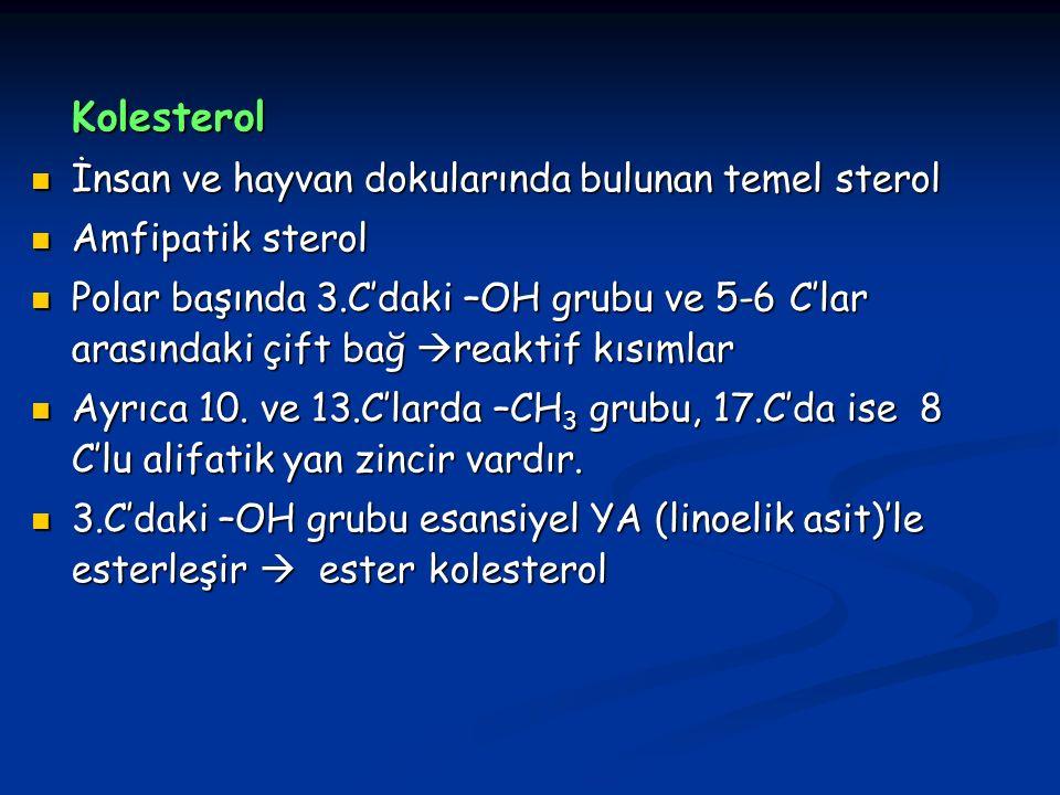 Kolesterol İnsan ve hayvan dokularında bulunan temel sterol İnsan ve hayvan dokularında bulunan temel sterol Amfipatik sterol Amfipatik sterol Polar başında 3.C'daki –OH grubu ve 5-6 C'lar arasındaki çift bağ  reaktif kısımlar Polar başında 3.C'daki –OH grubu ve 5-6 C'lar arasındaki çift bağ  reaktif kısımlar Ayrıca 10.