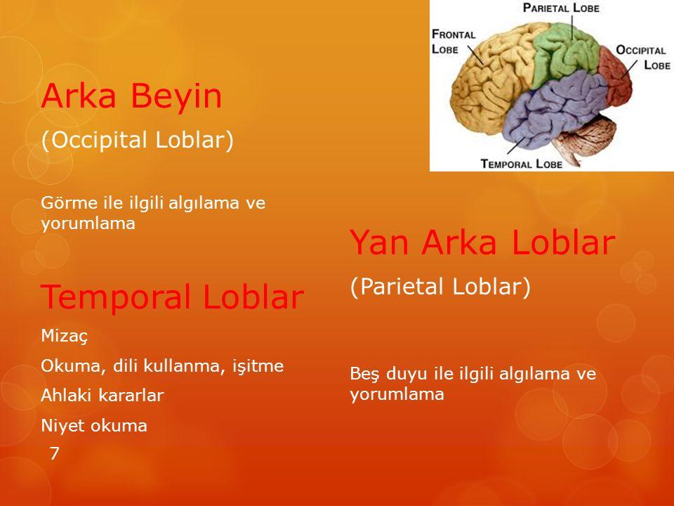 Arka Beyin (Occipital Loblar) Görme ile ilgili algılama ve yorumlama Temporal Loblar Mizaç Okuma, dili kullanma, işitme Ahlaki kararlar Niyet okuma Yan Arka Loblar (Parietal Loblar) Beş duyu ile ilgili algılama ve yorumlama 7