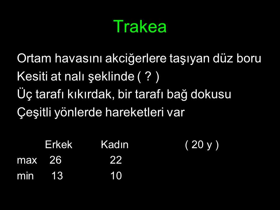 TrakeoBronşiyal Ağaç