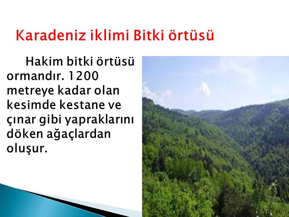 Hakim bitki örtüsü ormandır. 1200 metreye kadar olan kesimde kestane ve çınar gibi yapraklarını döken ağaçlardan oluşur. Karadeniz iklimi Bitki örtüsü