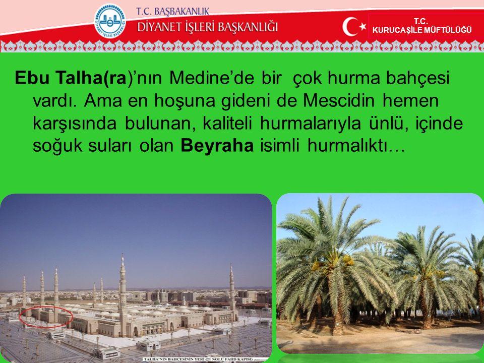 10 T.C. KURUCAŞİLE MÜFTÜLÜĞÜ Ebu Talha(ra)'nın Medine'de bir çok hurma bahçesi vardı. Ama en hoşuna gideni de Mescidin hemen karşısında bulunan, kalit