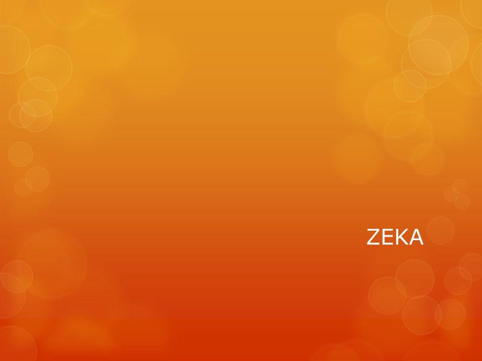 ÇOKLU ZEKA KURAMI (HoWARD GARDNER) Zeka, insandaki beyin ve sinir sistemlerinin birbiriyle etkileşimi sonucu ortaya çıkan çok yönlü bir olgudur.