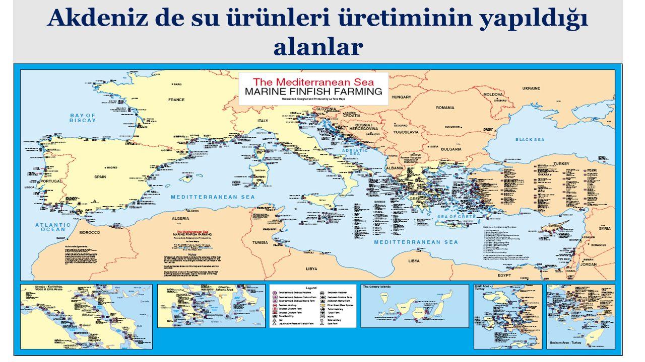 Akdeniz de su ürünleri üretiminin yapıldığı alanlar