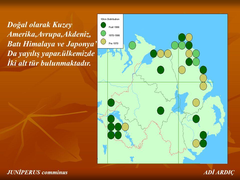 Doğal olarak Kuzey Amerika,Avrupa,Akdeniz, Batı Himalaya ve Japonya' Da yayılış yapar.ülkemizde İki alt tür bulunmaktadır. JUNİPERUS comminus ADİ ARDI