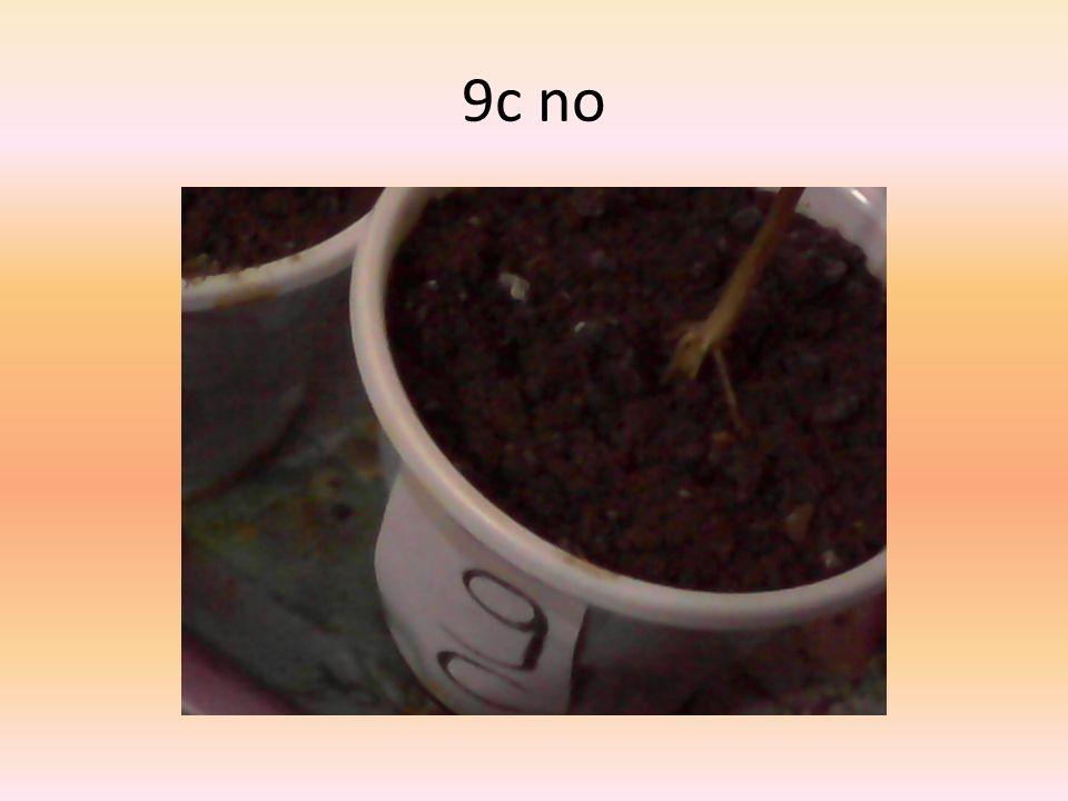 9c no