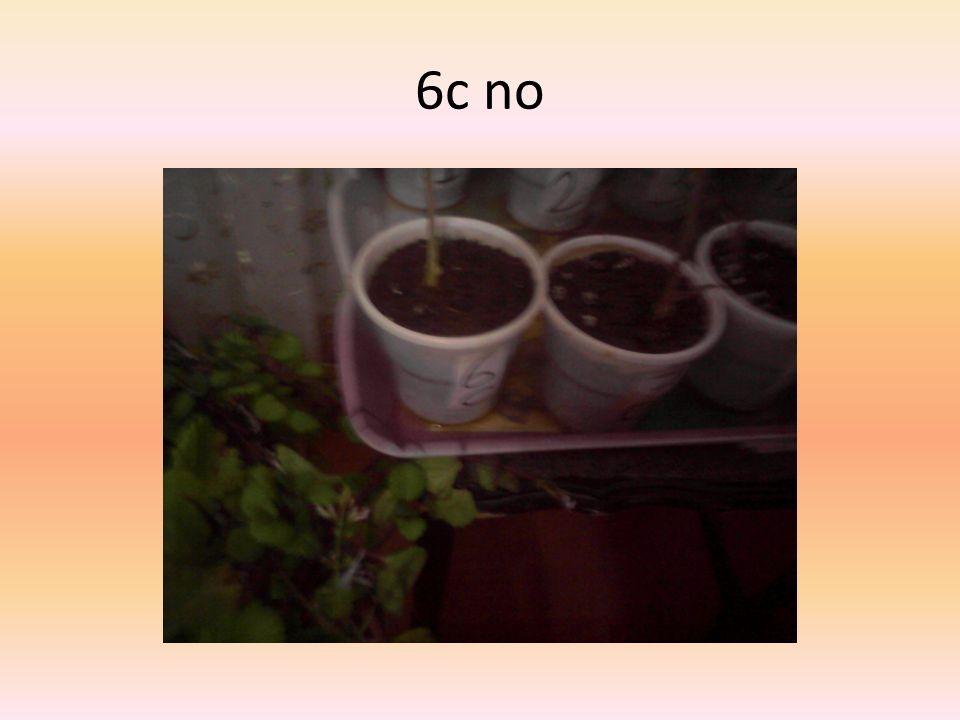 6c no