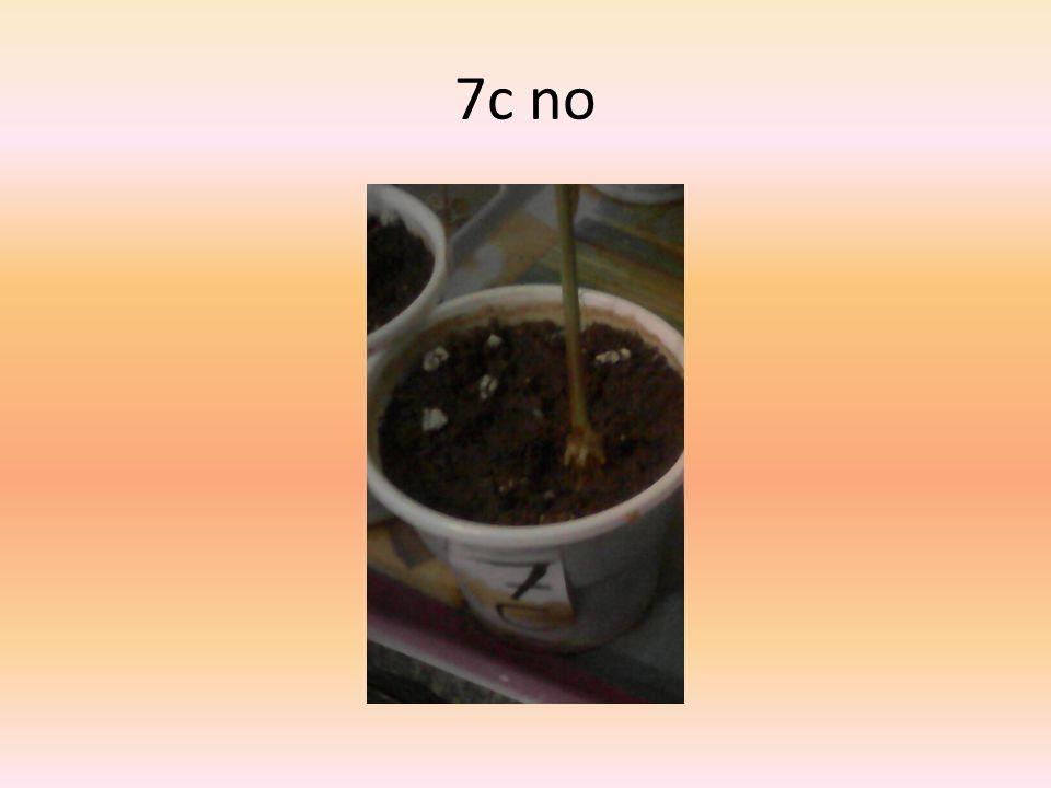 7c no