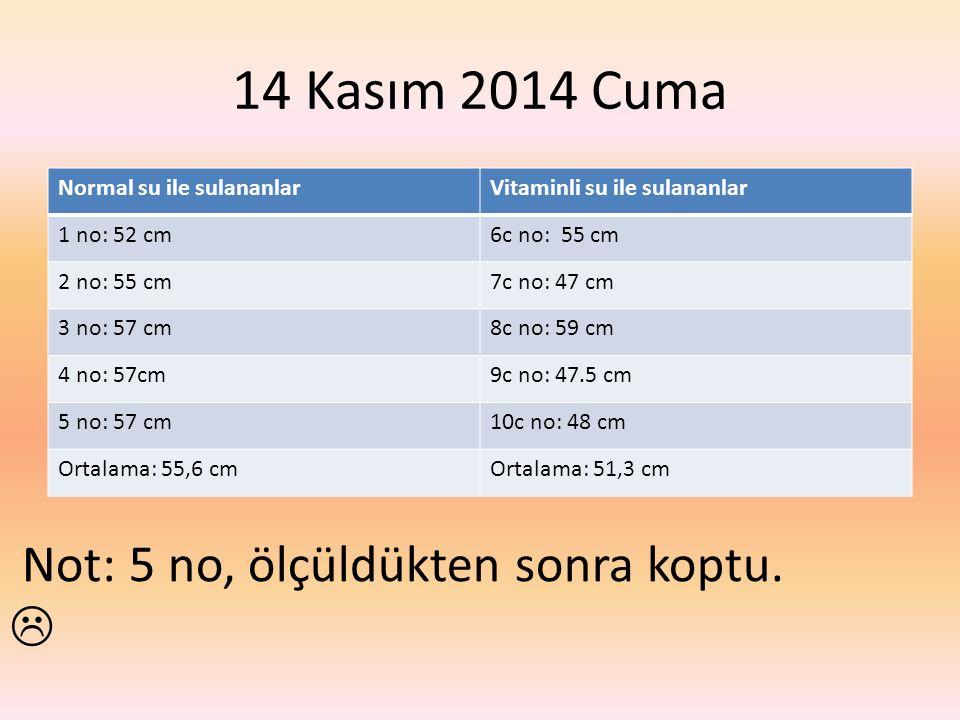 14 Kasım 2014 Cuma Normal su ile sulananlarVitaminli su ile sulananlar 1 no: 52 cm6c no: 55 cm 2 no: 55 cm7c no: 47 cm 3 no: 57 cm8c no: 59 cm 4 no: 57cm9c no: 47.5 cm 5 no: 57 cm10c no: 48 cm Ortalama: 55,6 cmOrtalama: 51,3 cm Not: 5 no, ölçüldükten sonra koptu.