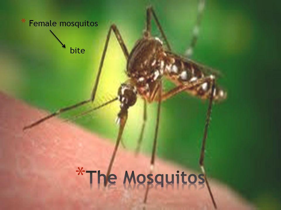 * Female mosquitos bite