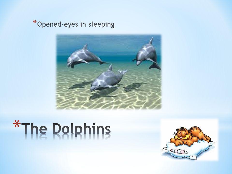 * Opened-eyes in sleeping