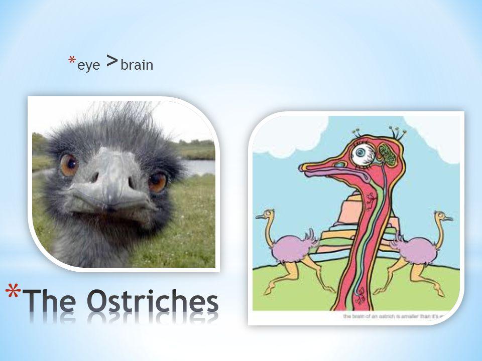 * eye > brain