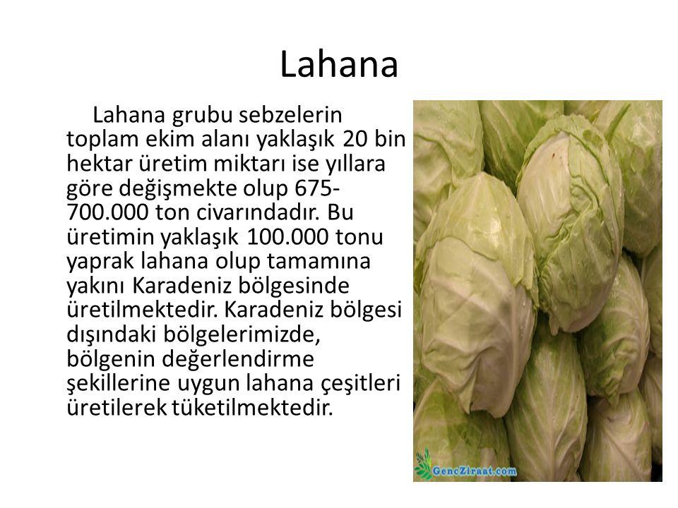 Lahana Lahana grubu sebzelerin toplam ekim alanı yaklaşık 20 bin hektar üretim miktarı ise yıllara göre değişmekte olup 675- 700.000 ton civarındadır.