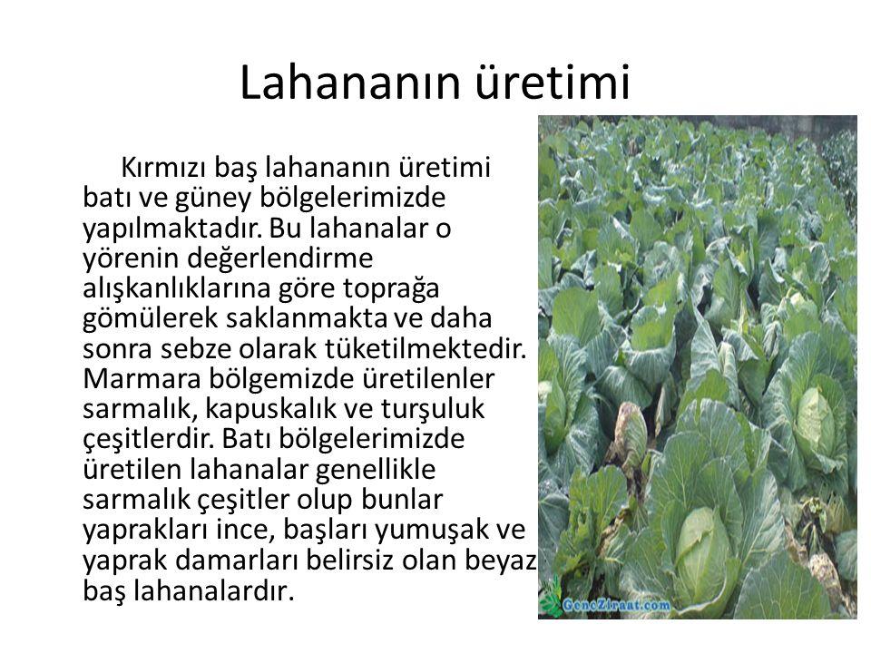 Lahananın üretimi Kırmızı baş lahananın üretimi batı ve güney bölgelerimizde yapılmaktadır.