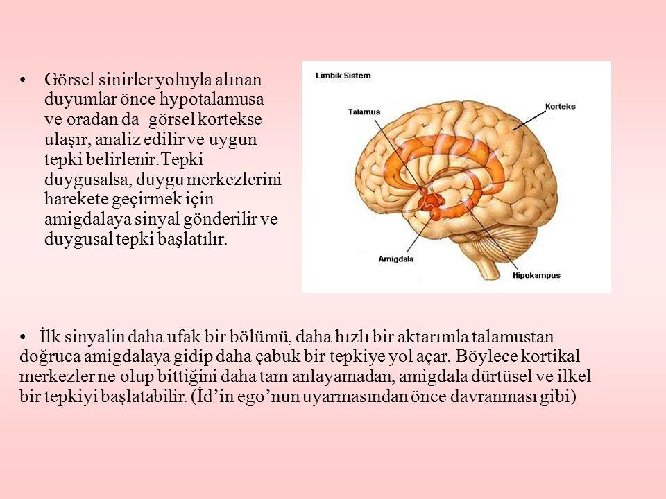 Görsel sinirler yoluyla alınan duyumlar önce hypotalamusa ve oradan da görsel kortekse ulaşır, analiz edilir ve uygun tepki belirlenir.Tepki duygusals
