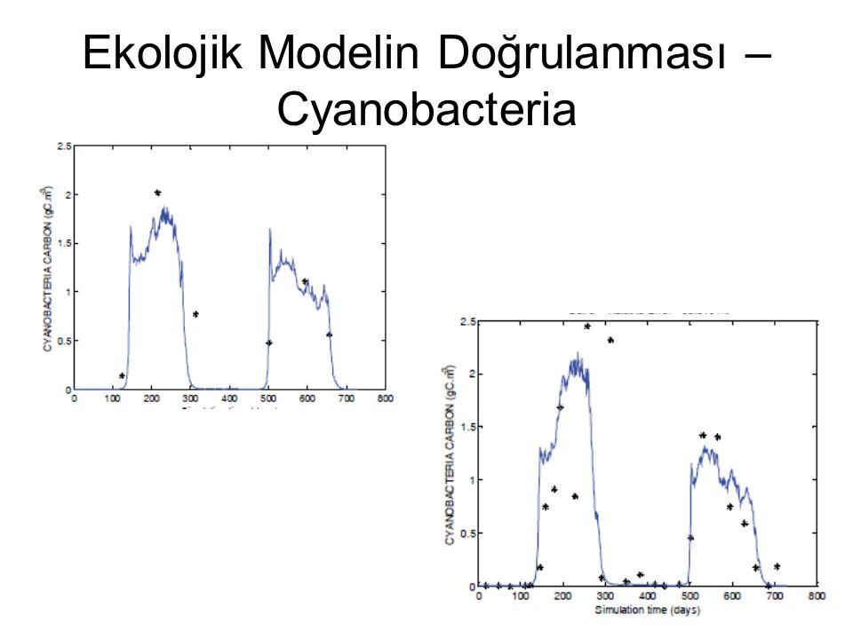 Ekolojik Modelin Doğrulanması – Cyanobacteria