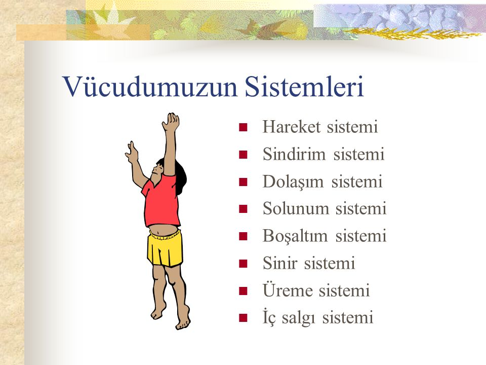 Vücudumuzun Sistemleri Hareket sistemi Sindirim sistemi Dolaşım sistemi Solunum sistemi Boşaltım sistemi Sinir sistemi Üreme sistemi İç salgı sistemi