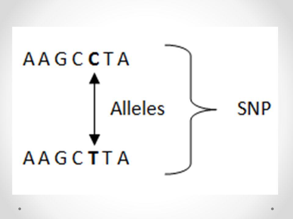 Motivasyon Genotip + Fenotip Bilgileri Başarım Karşılaştırması o K En Yakın Komşu (tembel öğrenme) o Karar Ağacı (özyineleme) o Naïve Bayes (olasılıksal model) o Destek Vektör Makinası (doğrusal olmayan)