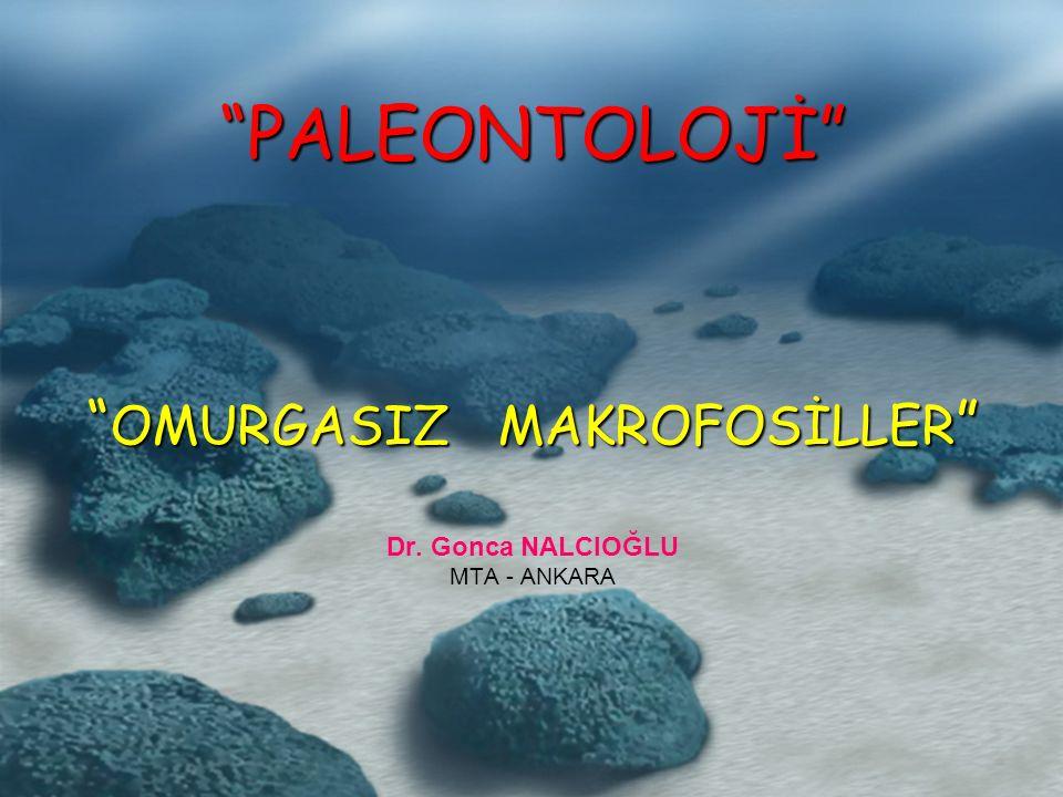 PALEONTOLOJİ OMURGASIZ MAKROFOSİLLER PALEONTOLOJİ OMURGASIZ MAKROFOSİLLER Dr.