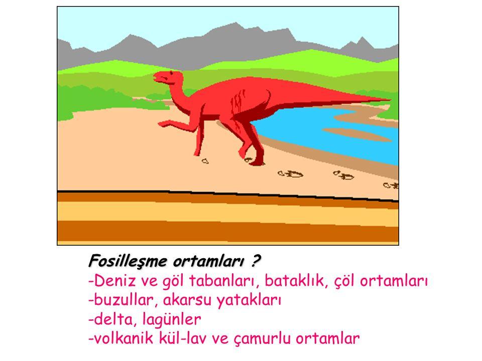 Fosilleşme ortamları .