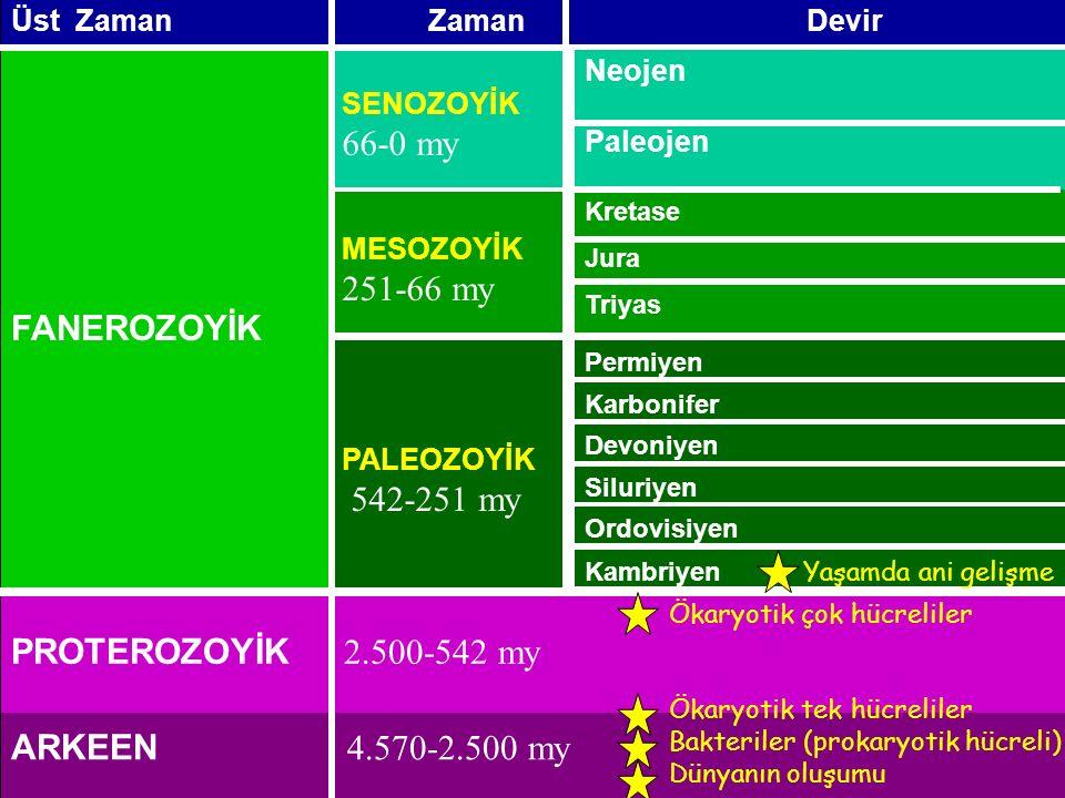 PROTEROZOYİK 2.500-542 my Kambriyen Ordovisiyen Siluriyen Devoniyen Karbonifer Permiyen PALEOZOYİK 542-251 my MESOZOYİK 251-66 my SENOZOYİK 66-0 my FANEROZOYİK DevirZamanÜst Zaman ARKEEN 4.570-2.500 my Ökaryotik çok hücreliler Ökaryotik tek hücreliler Bakteriler (prokaryotik hücreli) Dünyanın oluşumu Kretase Jura Triyas Neojen Paleojen Yaşamda ani gelişme