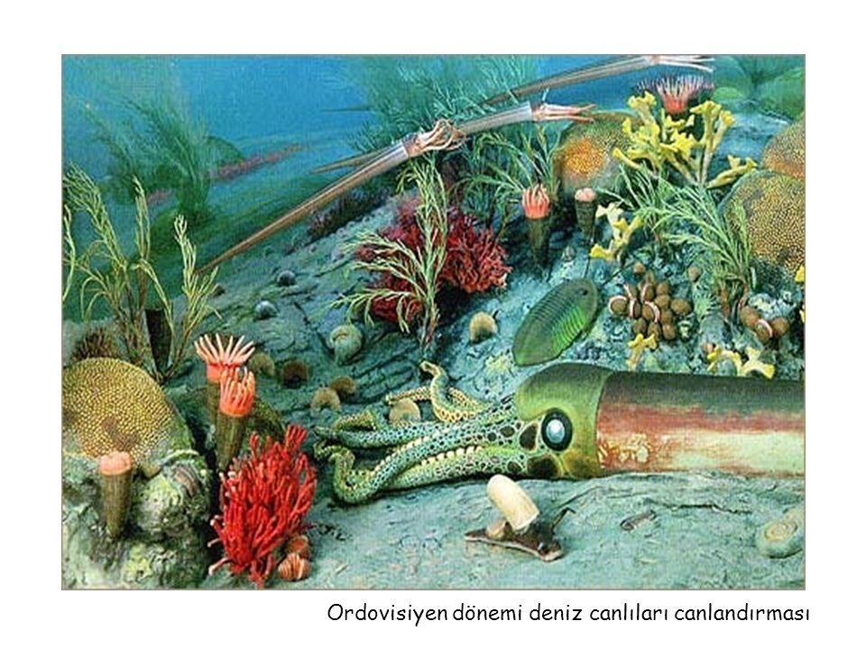 Ordovisiyen dönemi deniz canlıları canlandırması