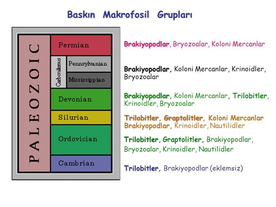 Trilobitler Brachiopodlar + Mercanlar + Bryozoalar Trilobitler Trilobitler, Brakiyopodlar (eklemsiz) Trilobitler Trilobitler, Graptolitler, Brakiyopodlar, Bryozoalar, Krinoidler, Nautilidler TrilobitlerGraptolitler Trilobitler, Graptolitler, Koloni Mercanlar Brakiyopodlar, Krinoidler, Nautilidler Brakiyopodlar Brakiyopodlar, Koloni Mercanlar, Trilobitler, Krinoidler, Bryozoalar Brakiyopodlar Brakiyopodlar, Koloni Mercanlar, Krinoidler, Bryozoalar Brakiyopodlar Brakiyopodlar, Bryozoalar, Koloni Mercanlar Baskın Makrofosil Grupları
