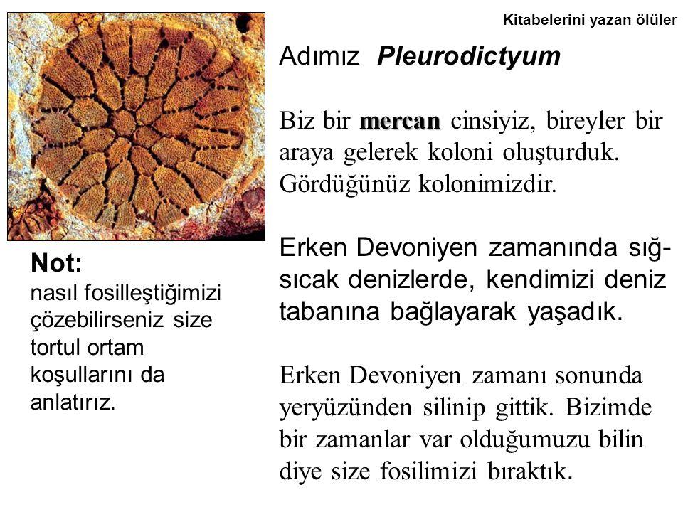 Kitabelerini yazan ölüler Adımız Pleurodictyum Biz bir m mm mercan cinsiyiz, bireyler bir araya gelerek koloni oluşturduk.